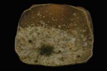 Platte - 2006 - 33x33cm