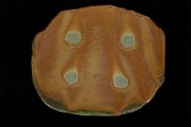 Platte - 2006 - 32x27cm
